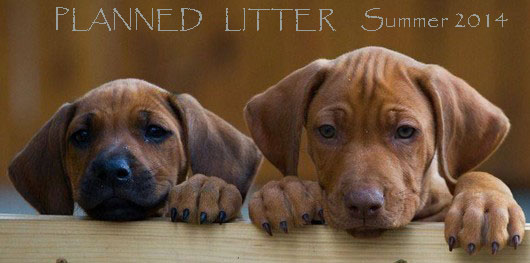 PLANNED-LITTER-2014-MELLORY-and.jpg